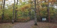 Senderismo en el Bosque de Orgi