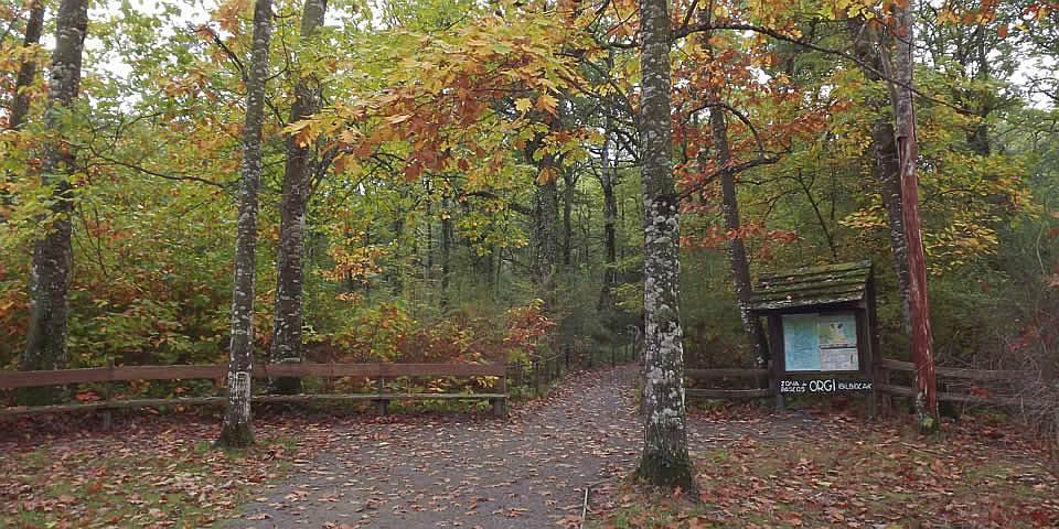 08-bosque-de-orgi-slider